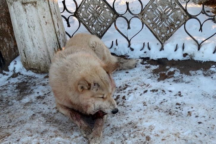Полиция Барды ищет несовершеннолетних живодеров, виновных в мучительной смерти собаки